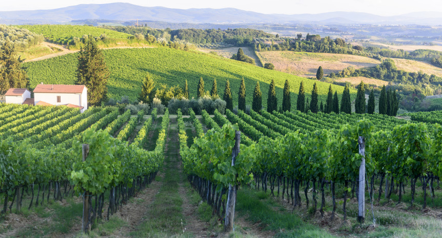 Landscape in Chianti (Florence Tuscany Italy) with vineyards at summer